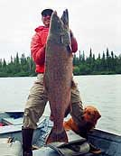 Kenai River - 80 LBs King Salmon