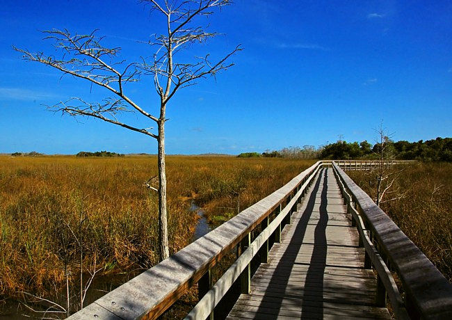 Pay-hay-okee Trail - Everglades National Park, Florida