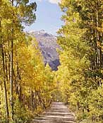 Autumn Aspens Backcountry Roads, Colorado
