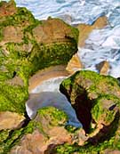Blow Holes in the Anastasia Formation - Blowing Rocks Preserve, Jupiter, Florida