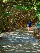 Sea Grape Forest Pathway - Blowing Rocks Preserve, Jupiter, Florida