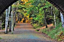 Carriage Road and Bridge in Acadia National Park, Maine