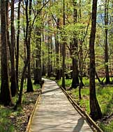 Elevated Boardwalk - Congaree National Park, SC