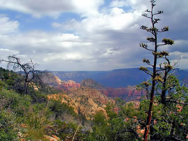 Bear Mountain - Oak Creek Canyon, Arizona