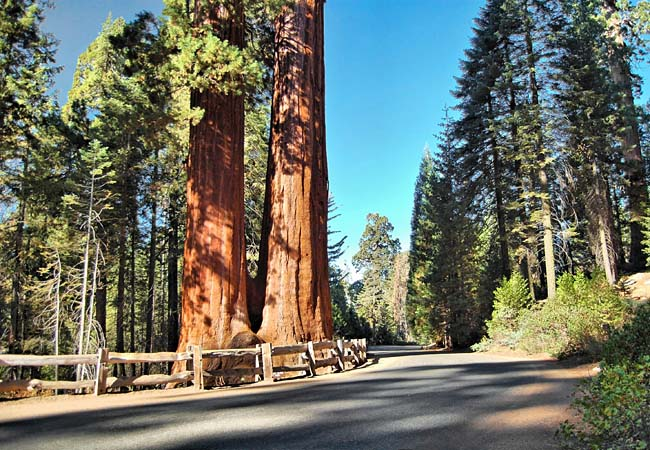 Grant Grove - Sequoia National Park, California