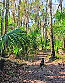 Florida Scenic Trail - Seminole County, Florida