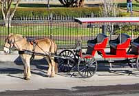 Horse and Carriage Tour - New Orleans, Louisiana
