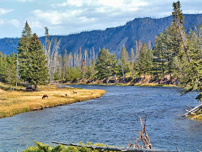 Madison River - Yellowstone National Park, Wyoming