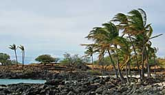 Windswept black lava shoreline - Lapakahi State Historic Park, Hawaii