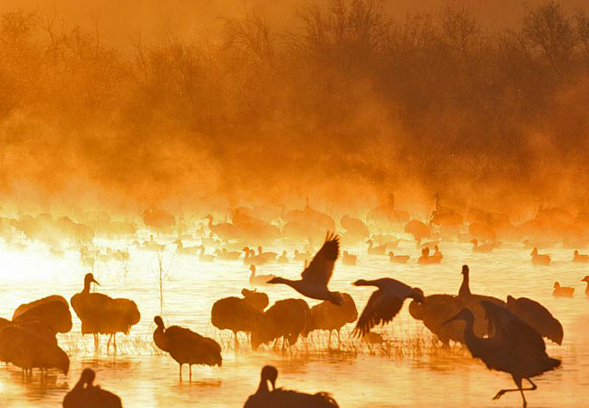Bosque del Apache National Wildlife Refuge - New Mexico
