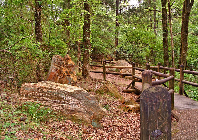 Nature Trail - Mississsippi Petrified Forest, Flora, Mississippi