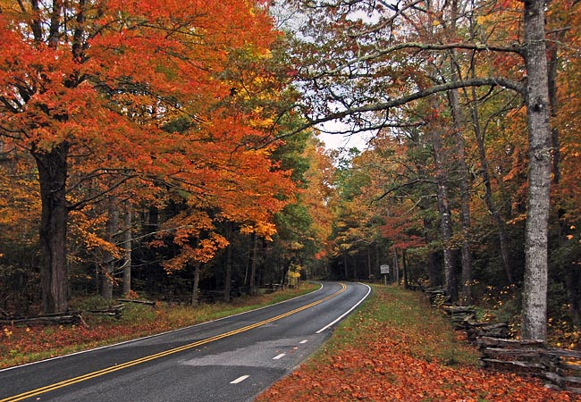 Autumn scene - Blue Ridge Parkway, North Carolina