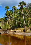 Econlockhatchee River - Seminole County, Florida