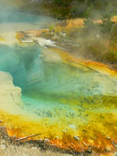 Thermal Pool - Yellowstone National Park