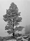 Lone Pine - Okanogan-Wenatchee National Forest, WA